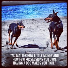 The love of a dog is priceless.  #ilovemydog #wordsofwisdom #quotes