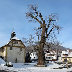 A lime tree in Haselbach, a part of Bischofsheim in the Bavarian part of Rhön. The 300-year-old small-leaved lime Tilia cordata is protected as a natural monument and at the lower nature conservation authority of the district of Rhön-listed grave field with the number 504 and is called Dorflinde. In 2010 the tribe had a circumference of 7.3 meters at a height of 25 meters.