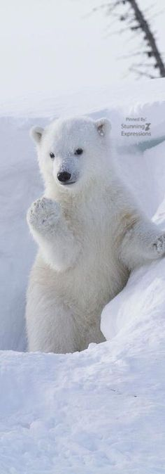 Polar Bear Jumps Across Ice Sheets Hand Towel 3D Rose Svalbard-Norway 15 x 22
