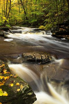 Kitchen Creek, Ricketts Glen State Park, Pennsylvania