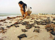 ¡Ayudemos a la Conservación de Tortugas Marinas!