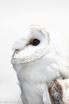Name: Arland Type: Barn Owl Bought by her parents in Diagon Alley before attending Hogwarts for her first year. Tyto Alba, Akaashi Keiji, Harry James Potter, Annabeth Chase, Harry Potter Aesthetic, Heroes Of Olympus, Greek Gods, Greek Mythology, Fantasy World