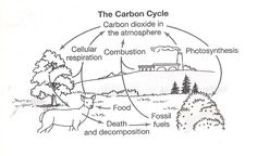 Carbon cycle diagram blank saferbrowser yahoo image search results image result for scientific theory worksheet ccuart Gallery