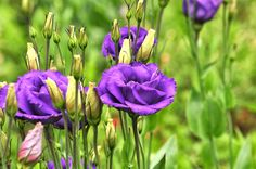 Flower Farming - Yahoo Image Search Results