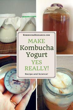 Can you use kombucha to ferment dairy milk? Here's how to make yoghurt (yogurt) at home using a kombucha scoby. Vegan Yogurt, Coconut Yogurt, Probiotic Foods, Fermented Foods, Kombucha Tee, Kombucha Brewing, Kombucha Flavors, Kombucha How To Make, Making Kombucha