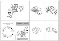 Ideenreise Mehr Insect Activities, Nature Activities, Kindergarten Activities, Preschool, Science Lessons, Science For Kids, Art For Kids, Ant Crafts, Kindergarten Portfolio