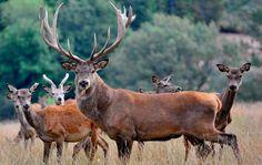 Avec plus de vingt hectares de forêts et prairies, le Saint-Hubert vous fait découvrir deux cents animaux de la faune sauvage à Gages près de Rodez.