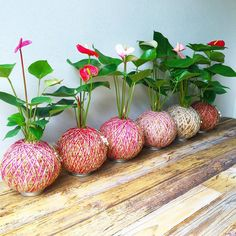 10 Photos That Prove Kokedama is the Best Plant Trend Right Now