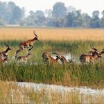 Visit the Serengeti today. A world-class safari and wildlife destination. From cheetahs and crocodiles to the migrating wildebeest, the Serengeti has it all. Chobe National Park, National Parks, Country Information, Okavango Delta, Game Reserve, African Safari, Nature Reserve, Tanzania, Mammals