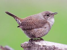 """""""just because I look  common as a wren meek as a robin  that does not mean what is inside me is also  common as a wren meek as a robin"""" -Audacity by Melanie Crowder"""