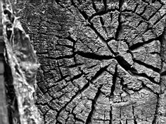 Wood Photography  facebook.com/mbgalleria Woods Photography, City Photo, Facebook