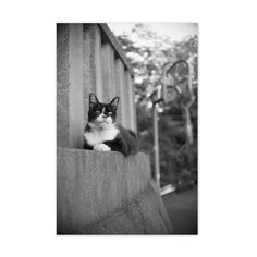 https://flic.kr/p/wSsFfS | Ruby August 2015  #cat #smallcats #blackandwhitephotography