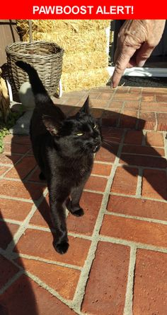 Is this your lost pet? Found in San Diego, CA 92107. Please spread the word so we can find the owner!  Description: All black, very friendly, bump on lip  Nearest Address: 1463 Savoy Circle, San Diego, CA, United States