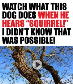 Haha, so funny http://theilovedogssite.com/watch-what-this-dog-does-when-he-hears-the-word-squirrel-i-didnt-know-that-was-possible/