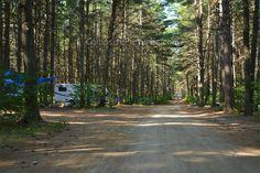 Pog Lake Algonquin Park Ontario Canada Algonquin Park, Ontario, Country Roads, Canada, Camping, Plants, Summer, Campsite, Summer Time