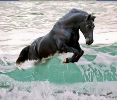 Black horse jumping the wave. Black horse jumping the wave. All The Pretty Horses, Beautiful Horses, Animals Beautiful, Simply Beautiful, Black Horses, Wild Horses, Dark Horse, Horse Pictures, Animal Pictures