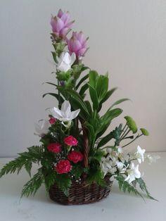 Curcuma orchids
