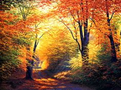 Beautiful Autumn Season Wallpaper HD