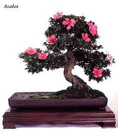 84 Best Bonsai Plants And Terrariums Images Inside Garden