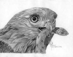 Lets Draw Pencil Drawing Course
