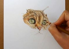 How to draw fur with colored pencils (cat)