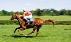 Free Horse Racing Tips | Betting Gods