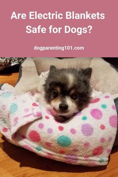 Now that the cold weather is pretty much here, it's time to figure out how we're going to keep our dogs warm. Are electric blankets the answer? #winterdogcare #keepwarm #dogcare #keepyourdogwarm Pet Sitters International, Cute Dog Photos, Dog Games, Pet Costumes, Parenting 101, Dog Mom, Pet Care, Animals And Pets, Haus