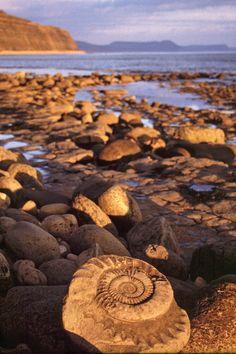 """England's """"Jurassic Coast"""". Photo courtesy of Jeremy Richardson"""