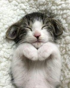 """249.5 mil Me gusta, 3,787 comentarios - Cats of Instagram (@cats_of_instagram) en Instagram: """"From @midorinotanbo: """"ムウちゃん、アハ体験"""" #catsofinstagram"""""""