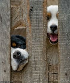 awe :) I pet a dog who sticks his face through the fence every time I walk by. So sweet <3