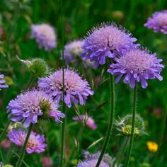 Sky Garden, Garden Plants, House Plants, Purple Garden, Garden Landscape Design, Garden Landscaping, Purple Flowers, Wild Flowers, Easiest Flowers To Grow