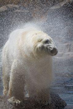 Polar Shake,.!