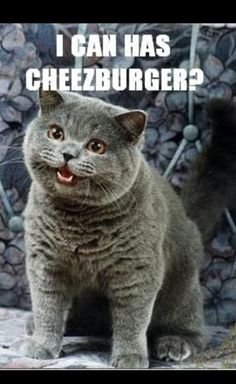 I can haz cheesburger?