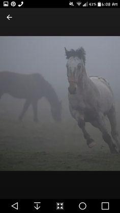Beautiful horses as the fog begins to lift. #loveanimalsandnatur