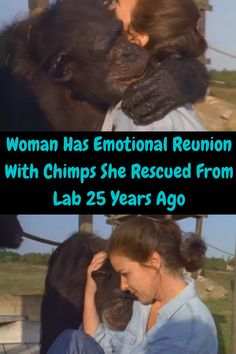 Linda Koebner was a 23-year-old graduate student when she was asked to participate in a bold new project. A hepatitis vaccine had been found, and certain chimpanzees who had sadly been used as guinea pigs to test the vaccine were no longer needed. But now it was their chance to experience freedom that they had never experienced before.