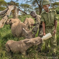Photo by @amivitale. Thank you for the incredible outpouring of love after the loss of beloved black rhino Kilifi. Kilifi was a great ambassador for all rhinos and taught us that man and wildlife can coexist in harmony. Please show your support and get engaged by following Lewa Wildlife Conservancy (@lewa_wildlife) the Northern Rangelands Trust (@nrt_kenya) and The Nature Conservancy in Africa (@nature_africa). We will pass on your comments to the rangers who lovingly protect these rhinos…