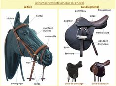 "All my horses are now on Equine Omega Complete."" Disc… – Art Of Equitation Horse Posters, Horse World, Horse Care, Horse Riding, Animals And Pets, Equestrian, Image, Blog, Concept"