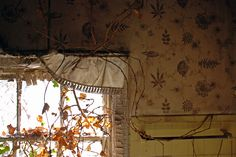 Antique wallpaper from abandoned homes on Admiral's Row