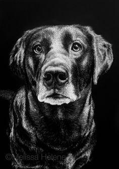 Brenna | Melissa Helene Fine Arts + Photography 5x7 scratchboard www.melissahelene.com #artwork #art #petportrait #portrait #dog #blackandwhite #commission #melissahelenefinearts #scratchboard #scratchart