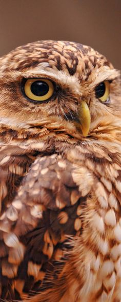 A wise old owl once lived in an oak. The more he heard, the less he spoke. The less he spoke, the more he heard... I want to be like that wise old bird ♥