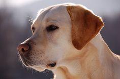 """Tutkija teki mullistavan havainnon – """"Joudumme muuttamaan suhtautumistamme koiriin"""""""