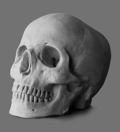 Drawing Cast - Skull