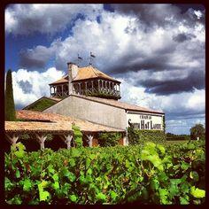 Dans les vignes #bordeaux
