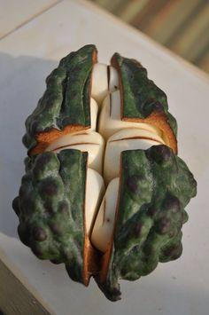 Kola nuts in the shell