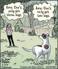 Bizarro - A Dog's Perspective