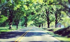North Carolina's Tunnel of  Trees