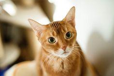 Feline Mania