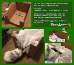 Rooting Box -  DIY Bunny Rabbit Toys that are Cheap and Easy to Make. Awesome for all sorts of small animals. Bunny approved DIY Rabbit toys!
