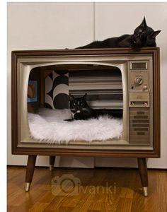 Maison à chats dans une vieille télé