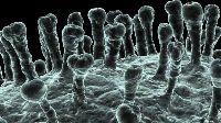 Severe Acute Respiratory syndrome, SARS causes of SARS, Treatment of SARS, Symptoms of SARS